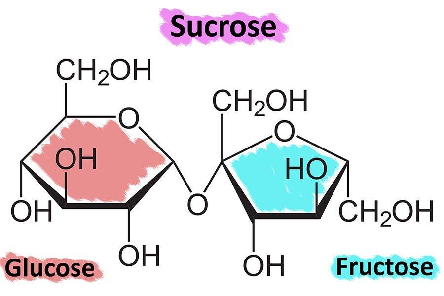 Glucose vs. Fructose